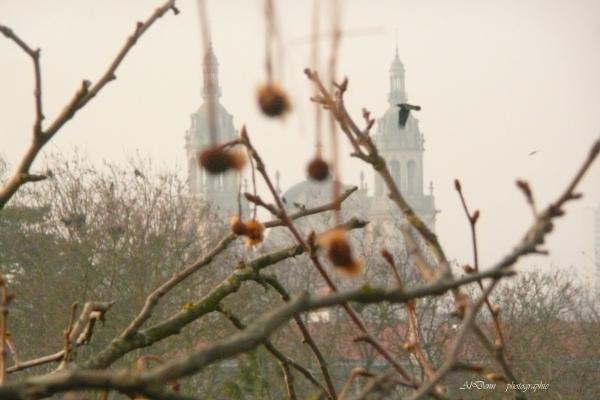 Série photographie : en haut des platanes de la Pépiniére